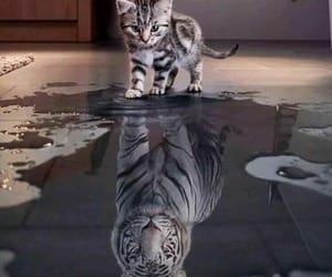 beautiful, eau, and tiger image