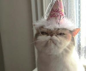 cat, happy birthday to me, and party image