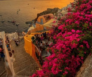 Greece, santorini, and flowers image