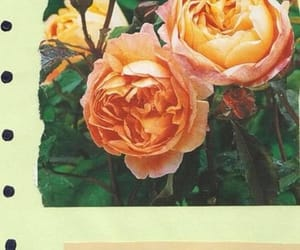are, rose, and some image
