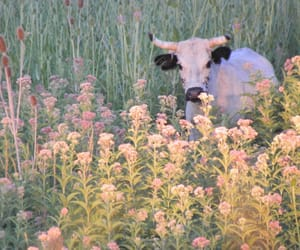 cow, flowers, and nature image