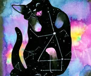 animal, catnip, and art image