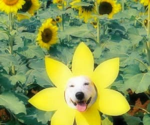 flowers, animals, and header image