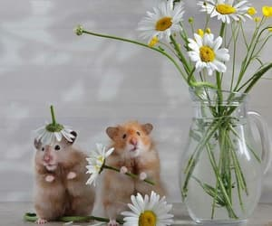 bouquet, couple, and cute image