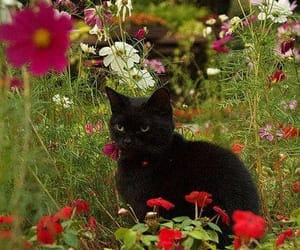 animals, cat, and spring image