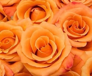 orange, flowers, and roses image