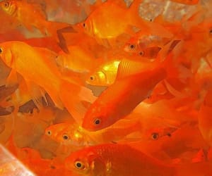 orange, fish, and aesthetic image