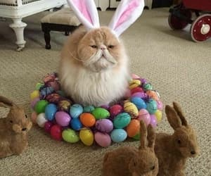 cats, easter, and persiancats image