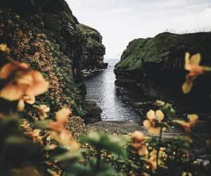 nature, flowers, and photography image