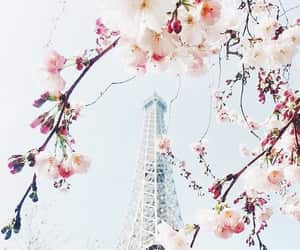 flowers, paris, and spring image