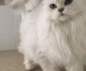wallpaper, cat, and lockscreen image