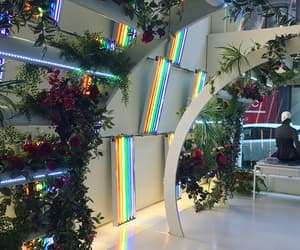 rainbow, beautiful, and plants image