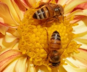 adore, aesthetic, and bees image
