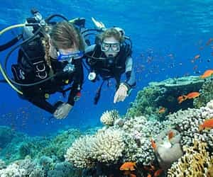 scuba diving, destination in florida, and florida scuba image