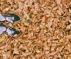 art, autumn, and colors image