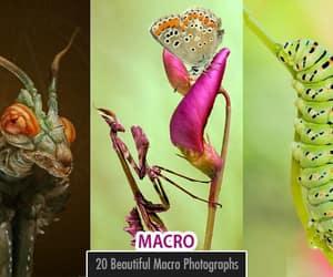 macro photography, macro photos, and macro photo image