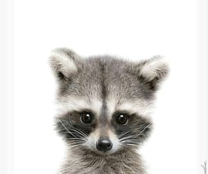 adorable, raccoon, and cute image