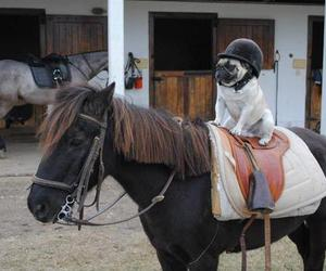 horse, dog, and pug image