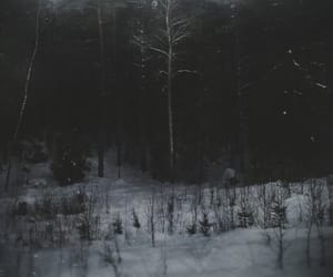 cold, dark, and trees image