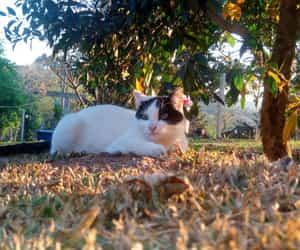 cat, cats, and filhotinhos image
