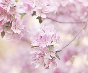 beautiful, flores, and flowers image