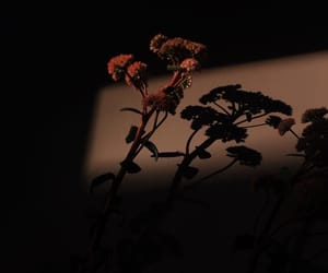 flowers, aesthetic, and alternative image