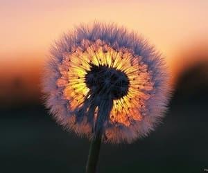 flowers & garden image