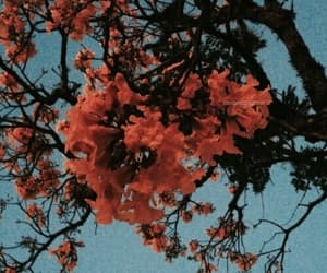 orange, flowers, and blue image