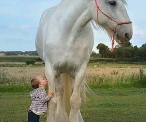 animals, cuteness, and horses image