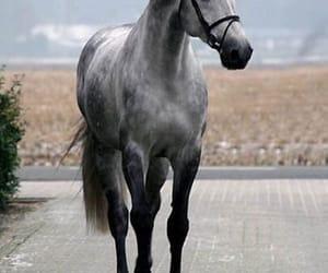 halter, animals, and grey image