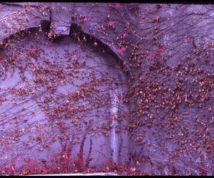 doors, ivy, and purple image