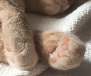 animal, furry, and kitten image