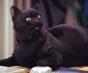 cat, salem, and online image