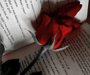 rose, book, and red image