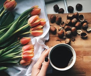 flowers, nuts, and tulips image