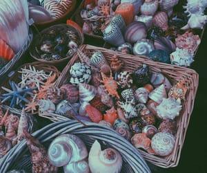 mar, conchas, and paris image