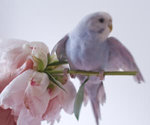 bird, flowers, and parrot image