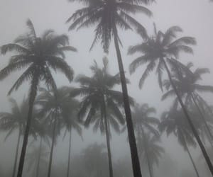 grunge, pale, and palm trees image
