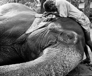 care, love, and elephant image