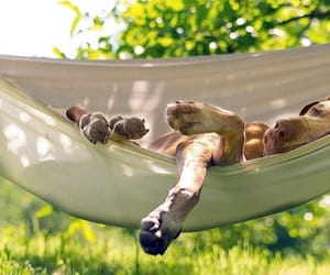 dog, animal, and hammock image