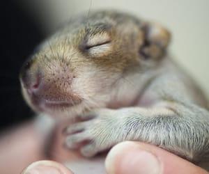 Bany Squirrel http://wildlifeaid.tumblr.com/post/172210626996/squirrel