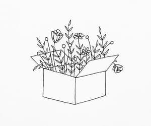 box, flower, and ilustracion image