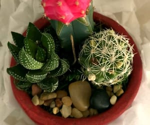 cactus, earth, and spring image
