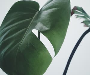 aesthetic, monstera, and plants image
