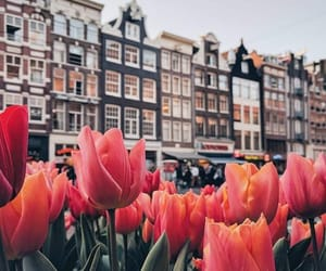 tulips, flowers, and travel image