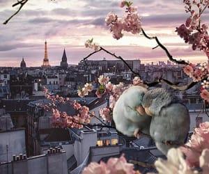 paris, birds, and love image