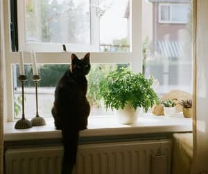 cat, hipster, and photography image