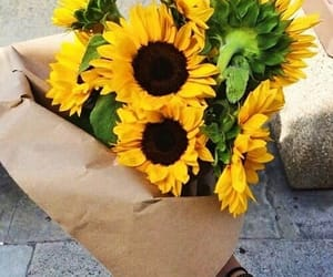 sunflowers, yellow, and flowers & garden image