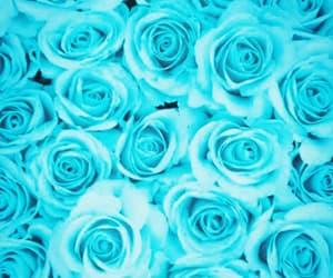 beautiful, beauty, and rose image