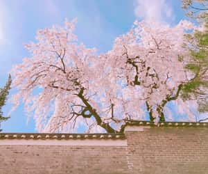 flower, japan, and pastel image
